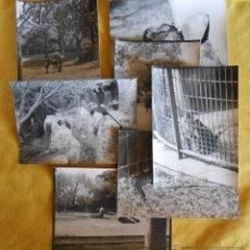 Fotografía antigua: LOTE 8 FOTOGRAFÍAS ZOO BARCELONA. AÑOS 70. Lote 49481094