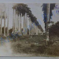 Fotografía antigua: FOTOGRAFÍA ANTIGUA ORIGINAL. PALMERAL. CUBA. 1919 (11,5 X 8,5 CM) . Lote 56474863