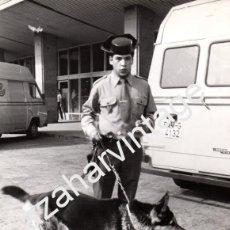 Fotografía antigua: AEROPUERTO DE BARAJAS,1979, GUARDIA CIVIL, UNIDAD CANINA, DETECTANDO EXPLOSIVOS,178X242MM. Lote 58819556