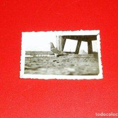 Fotografía antigua: FOTOGRAFIA DE LA PALOMA GANADORA CAMPEONATO DE BALEARES AÑO 1930-31.COLOMBICULTURA.. Lote 83446444