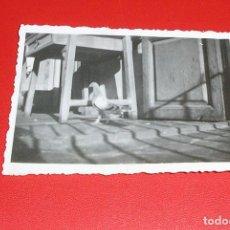 Fotografía antigua: FOTOGRAFIA DE UNA PALOMA AÑOS 30.COLOMBICULTURA.. Lote 83446536