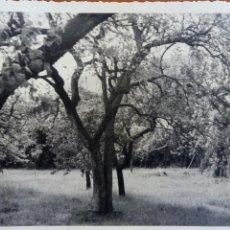 Fotografía antigua: TURIENO, CAMALEÑO (VALLE DE LIEBANA, CANTABRIA). FOTOGRAFÍA AÑOS 60.. Lote 116076126
