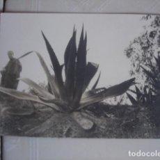 Fotografía antigua: MARRUECOS. HOMBRE CON ATUENDO TRADICIONAL PASEANDO JUNTO A UNAS PITAS. CASABLANCA, INVIERNO DE 1967. Lote 119438451