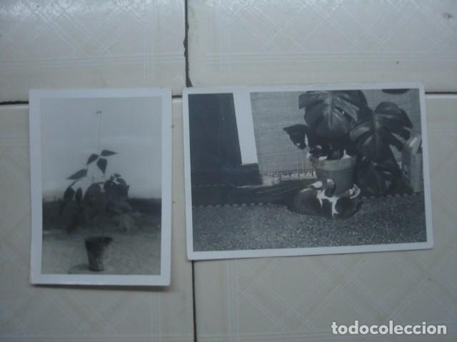 MARRUECOS. MACETAS. AÑOS 60. 2 FOTOS. (Fotografía Antigua - Fotomecánica)