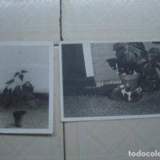 Fotografía antigua: MARRUECOS. MACETAS. AÑOS 60. 2 FOTOS. . Lote 119482683