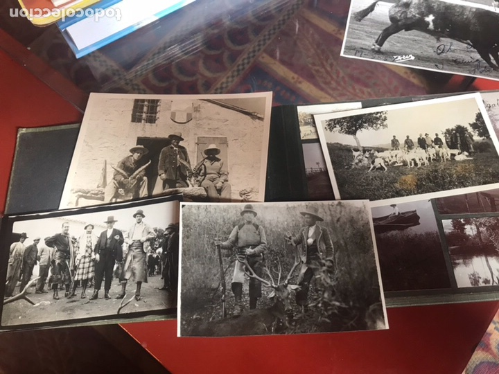 Fotografía antigua: Álbum con fotografías antiguas caza campo Caballos toros agricultura - Foto 2 - 132366993
