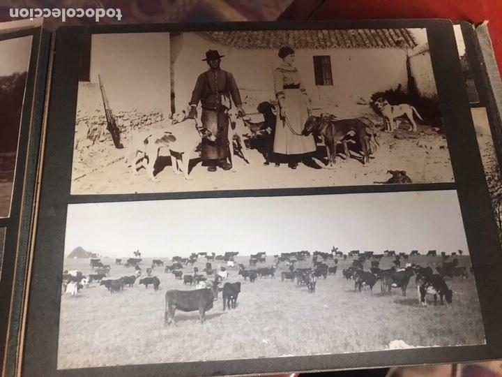 Fotografía antigua: Álbum con fotografías antiguas caza campo Caballos toros agricultura - Foto 11 - 132366993