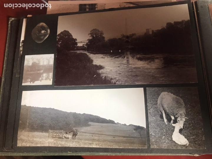 Fotografía antigua: Álbum con fotografías antiguas caza campo Caballos toros agricultura - Foto 12 - 132366993