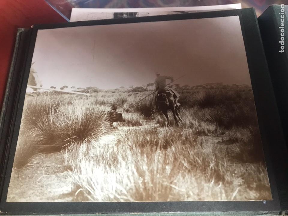 Fotografía antigua: Álbum con fotografías antiguas caza campo Caballos toros agricultura - Foto 13 - 132366993