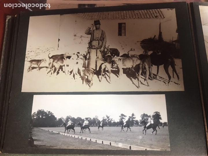 Fotografía antigua: Álbum con fotografías antiguas caza campo Caballos toros agricultura - Foto 15 - 132366993