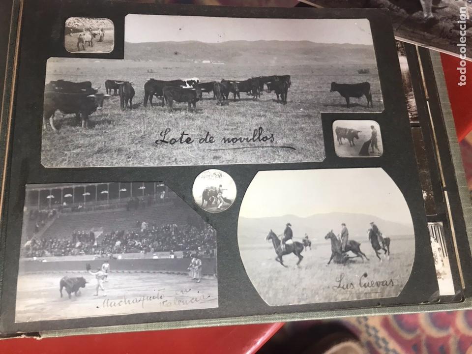 Fotografía antigua: Álbum con fotografías antiguas caza campo Caballos toros agricultura - Foto 20 - 132366993