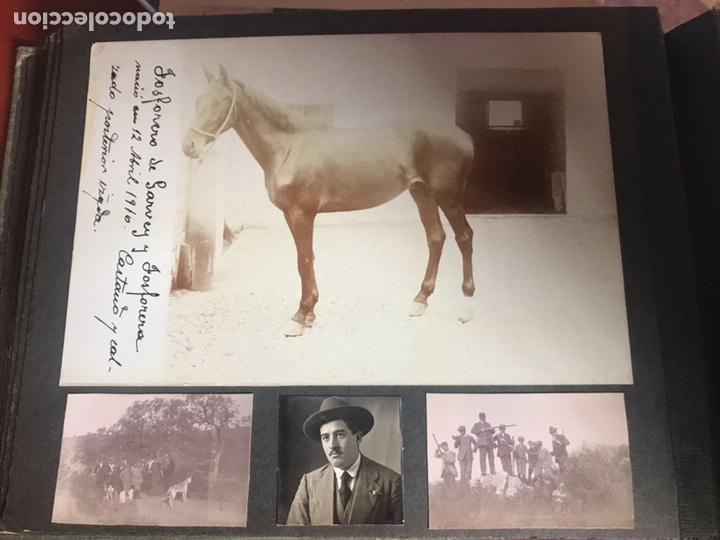 Fotografía antigua: Álbum con fotografías antiguas caza campo Caballos toros agricultura - Foto 21 - 132366993