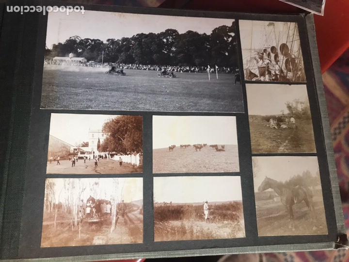 Fotografía antigua: Álbum con fotografías antiguas caza campo Caballos toros agricultura - Foto 26 - 132366993