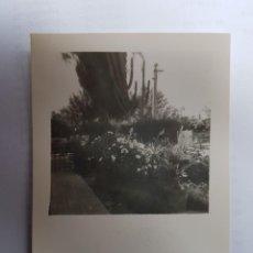Fotografía antigua: HERMOSO JARDÍN, BEAUTIFUL GARDEN, BEAU JARDIN. Lote 134247226