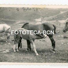 Fotografía antigua: FOTO ORIGINAL SANTUARIO DE NURIA CABALLOS YEGUA POTRO AÑOS 50. Lote 143152938