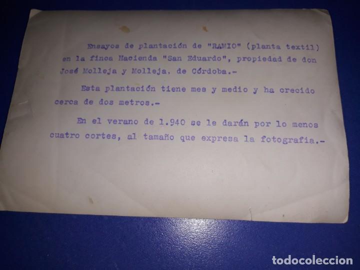 Fotografía antigua: Fotografia de la finca Hacienda San Eduardo de Cordoba años 30 - Foto 2 - 152155878