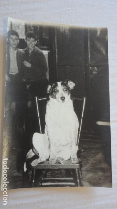 ANTIGUA FOTOGRAFIA DE PERRO EN UNA SILLA.FOTO MANUEL GOMEZ ARIA.SEVILLA AÑOS 60 (Fotografía Antigua - Fotomecánica)