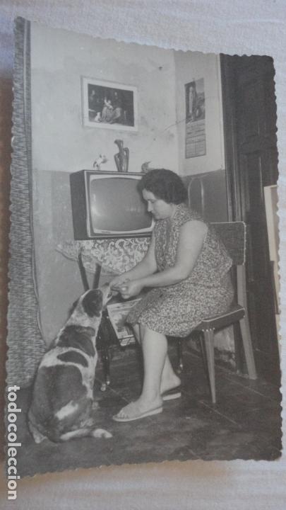 ANTIGUA FOTOGRAFIA SEÑORA DANDO DE COMER A PERRO.FOTO ALONSO.SEVILLA 1964 (Fotografía Antigua - Fotomecánica)