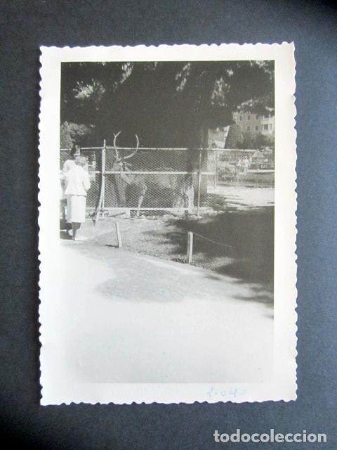 AÑO 1960. RETIRO, MADRID. CIERVO. ANTIGUA FOTOGRAFÍA. 12 X 8,4 CM. (Fotografía Antigua - Fotomecánica)
