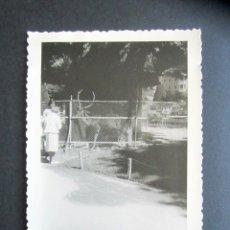 Fotografía antigua: AÑO 1960. RETIRO, MADRID. CIERVO. ANTIGUA FOTOGRAFÍA. 12 X 8,4 CM. . Lote 176822678