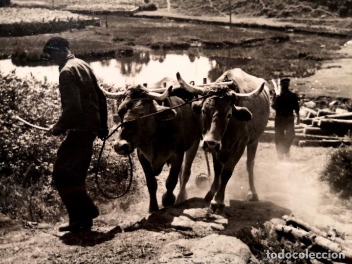 Fotografía antigua: FOTOGRAFÍA ANTIGUA CARRO DE BUEYES EN PONTESAMPAIO PONTEVEDRA - Foto 3 - 177746124