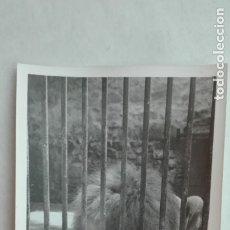 Fotografía antigua: FOTO DE UN LEON . ZOO DE JEREZ DE LA FRONTERA, 1977. Lote 180143657