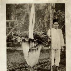 Fotografía antigua: BOGOR BUITENZORG JAVA INDONESIA FLEURE CRACK !!!! SEE SCAN FONDS VICTOR FORBIN 1864-1947. Lote 183216030