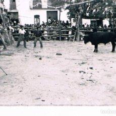 Fotografía antigua: PARCENT (ALICANTE). AÑO 1954. TOROS. Lote 183866103