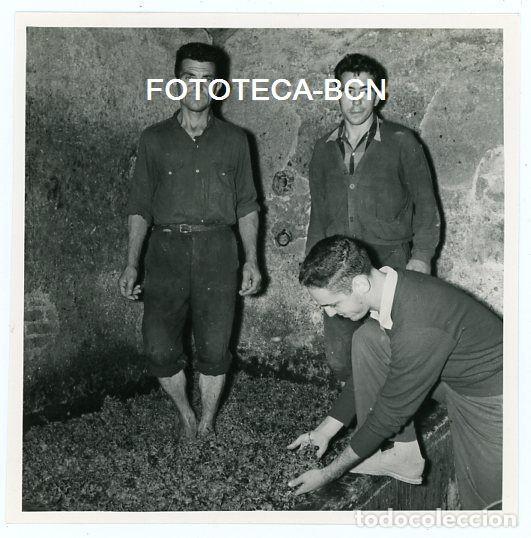 FOTO ORIGINAL ARENYS DE MUNT VENDIMIA HOMBRES PRENSANDO UVA AÑO 1958 (Fotografía Antigua - Fotomecánica)