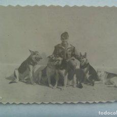 Fotografía antigua: LA LEGION : FOTO DE LEGIONARIO CON PERROS PASTOR ALEMAN. Lote 222491752