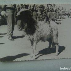 Fotografía antigua: LA LEGION : FOTO DE LAS MASCOTAS, MONO VESTIDO DE LEGIONARIO SOBRE LA CABRA. Lote 222504336