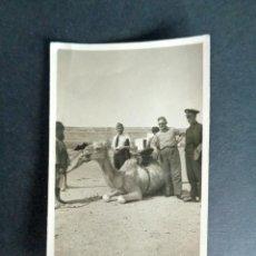 Fotografía antigua: ANTIGUA FOTOGRAFÍA AÑO 1938. CAMELLOS. 5,5X8,8CM. Lote 222557780