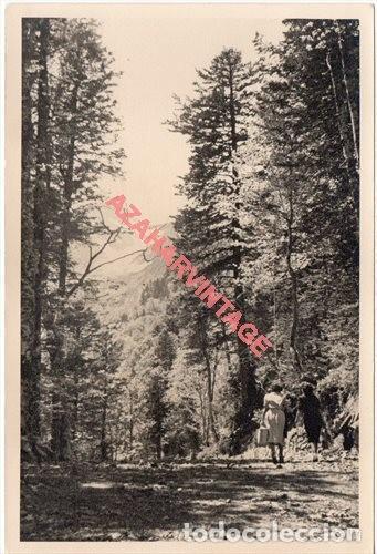 FOTOGRAFIA 18X12 - AÑOS 40 - MADERAS DEL VALLE DE ARAN - BARCELONA - HAYAS Y ABETOS (Fotografía Antigua - Fotomecánica)