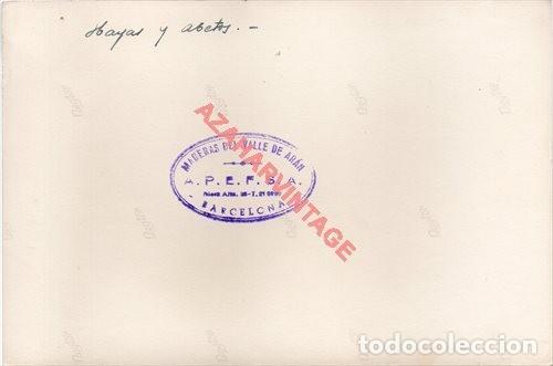 Fotografía antigua: FOTOGRAFIA 18X12 - AÑOS 40 - MADERAS DEL VALLE DE ARAN - BARCELONA - HAYAS Y ABETOS - Foto 2 - 223453671
