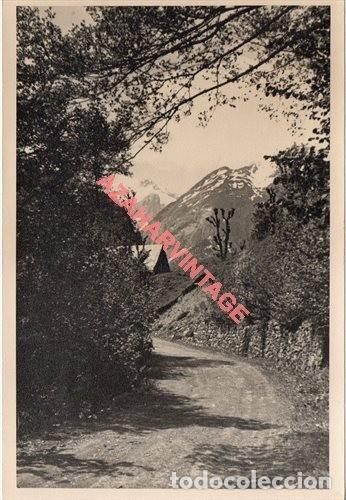 FOTOGRAFIA 18X12 - AÑOS 40 - MADERAS DEL VALLE DE ARAN - BARCELONA - CAMINO MADERERO (Fotografía Antigua - Fotomecánica)