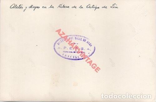 Fotografía antigua: FOTOGRAFIA 18X12 - AÑOS 40 - MADERAS DEL VALLE DE ARAN - BARCELONA - ABETOS Y HAYAS EN LA RIBERA - Foto 2 - 223454042