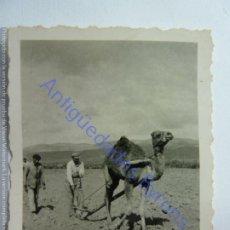 Fotografía antigua: LANZAROTE O FUERTEVENTURA. CAMELLO Y ARADO. (6 X 5 CM). Lote 243894640
