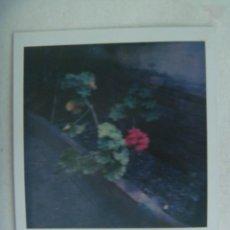 Fotografía antigua: FOTO POLAROID DE UN ARRIATE CON GERANIOS. Lote 262983700