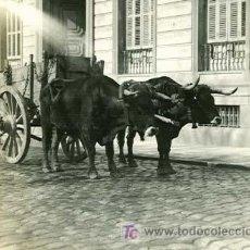 Fotografía antigua: MADRID. EL CARRO DE LA BASURA. BUEYES, CARRO Y ENCARGADO DE LA BASURA. CIRCA 1905. Lote 25774977