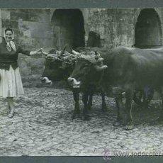 Fotografía antigua: SANTANDER. DIFERENTES FOTOS DE LA PROVINCIA. C. 1960. Lote 31230929