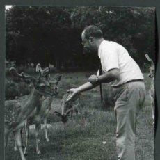 Fotografía antigua: LA GRANJA DE SAN IDELFONSO. SEGOVIA. C. 1965. REAL SITIO. SEÑOR DANDO DE CMER. C. 1965. Lote 32391504