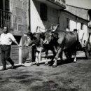 Fotografía antigua: GALICIA. CARRO CON BUEYES. C. 1960. Lote 39796296