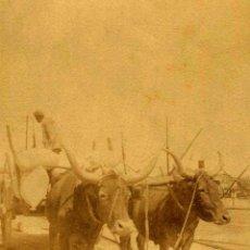 Fotografía antigua: CARRETA TIRADA POR BUEYES. C. 1905. Lote 50140287
