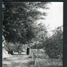 Fotografía antigua: IBIZA. ESCENA CAMPESTRE. IBICENCA I CABRA EN EL HUERTO. 1971. Lote 53281933
