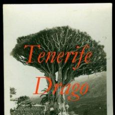 Fotografia antica: TENERIFE - DRAGO - FOTOGRAFIA BAENA . Lote 53940613