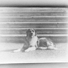 Fotografía antigua: CAJA CON 15 NEGATIVOS DE VIDRIO DE - FOTOS FAMILIA ANTIGUA RUSIA 1906. Lote 57558477