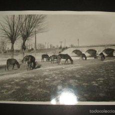 Fotografía antigua: MADRID PUENTE Y GANADO FOTOGRAFIA AÑOS 20 13 X 18 CMTS CHRISTIAN DE CATERS FOTOGRAFO. Lote 58083142