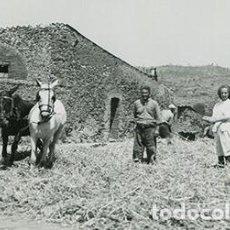 Fotografía antigua: GUIMERÀ. CATALUÑA. TRILLANDO EL GRANO EN EL ERA. DOS CABALLOS Y MUCHACHA DE BLANCO. AÑOS 30. Lote 67487689