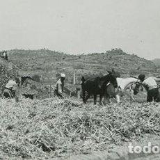 Fotografía antigua: GUIMERÀ. CATALUÑA. TRILLANDO EL GRANO EN EL ERA. ESTAMPA RURAL. AÑOS 30. Lote 67487989