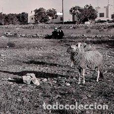 Fotografía antigua: IBIZA. EIVISSA. DOS MUJERES IBICENCAS CHARLANDO MIENTRAS SUS OVEJAS PASTAN. 1963. Lote 72296579